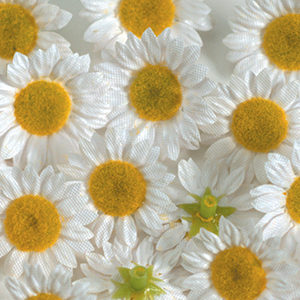 Cvet marjetice