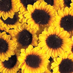 cvet sončnice